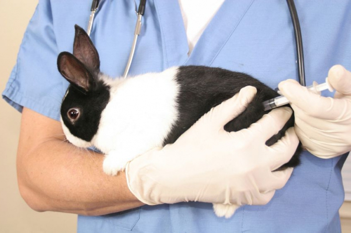 Врач делает кролику укол