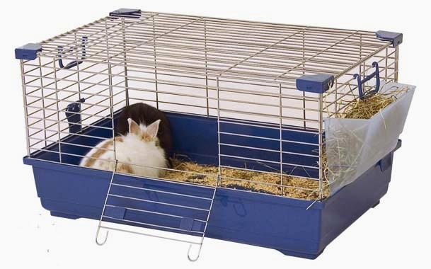 Два крольчонка в клетке