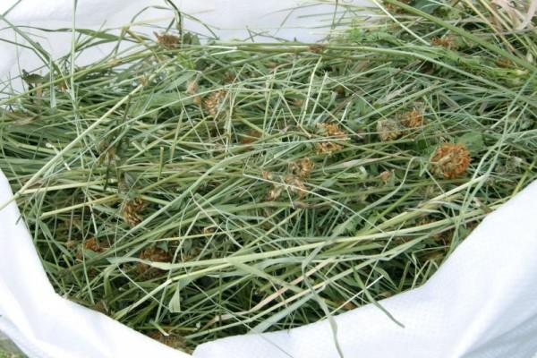 Свежее луговое сено правильной заготовки