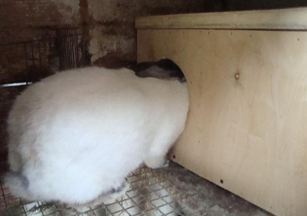 Как сделать маточник для кроликов своими руками: чертежи с размерами, фото и видео