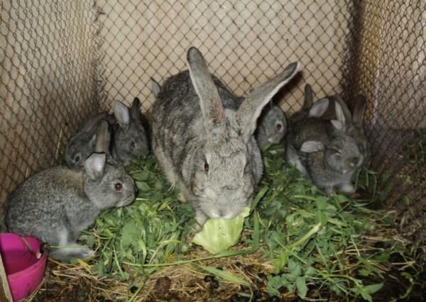 Самка с малышами жуют траву