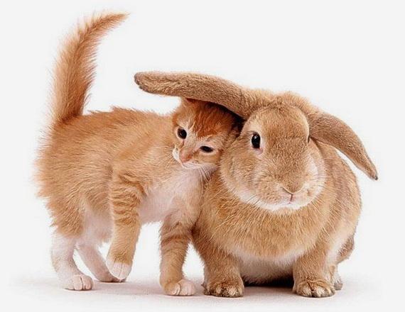 Рыжий котенок с домашним кроликом