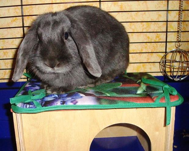Пушистый кролик в домике