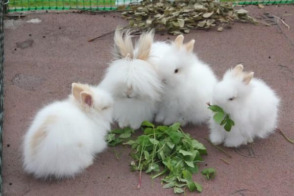 Пушистые питомцы едят свежую зелень