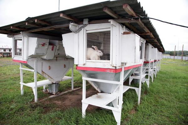 Крольчатники на ферме