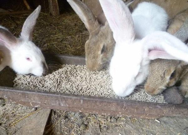 Кролики едят корм из кормушки