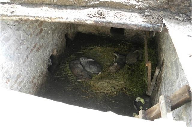 Обустроенная яма с кролями