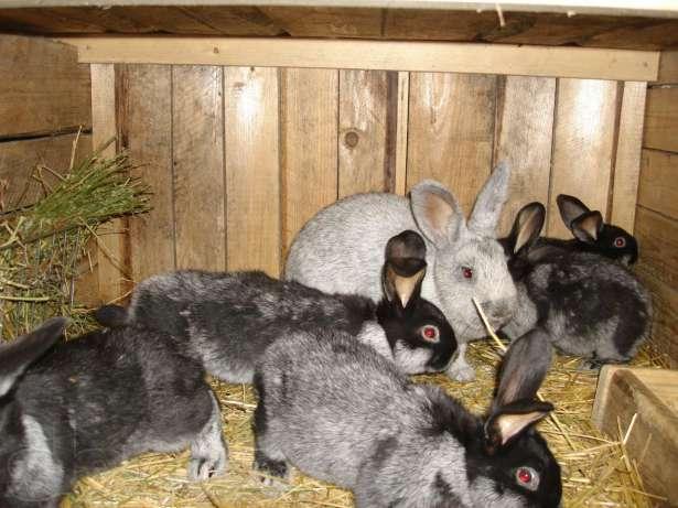 Молодые кролики в крольчатнике