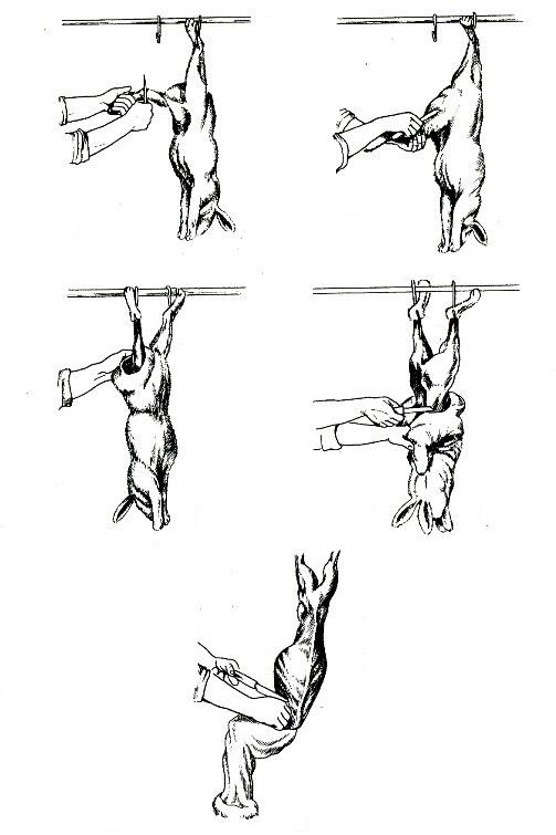 Поэтапная схема разделки тушки
