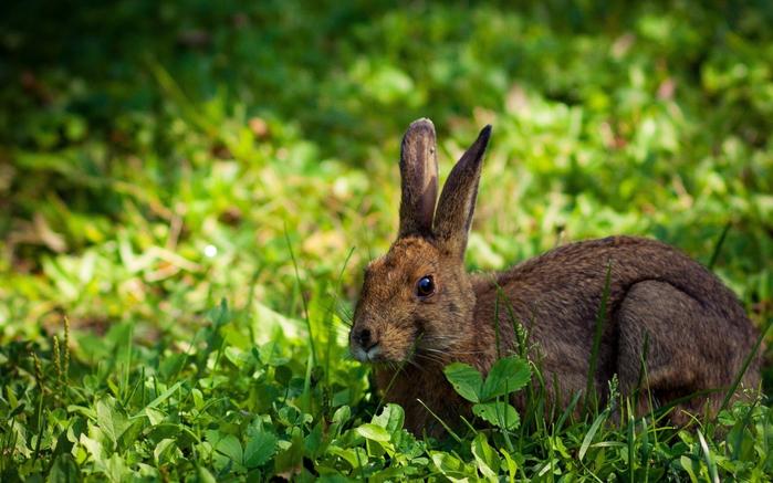 Кролик в поиске вкусной травки