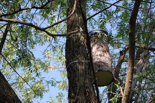 Круглая дуплянка на дереве