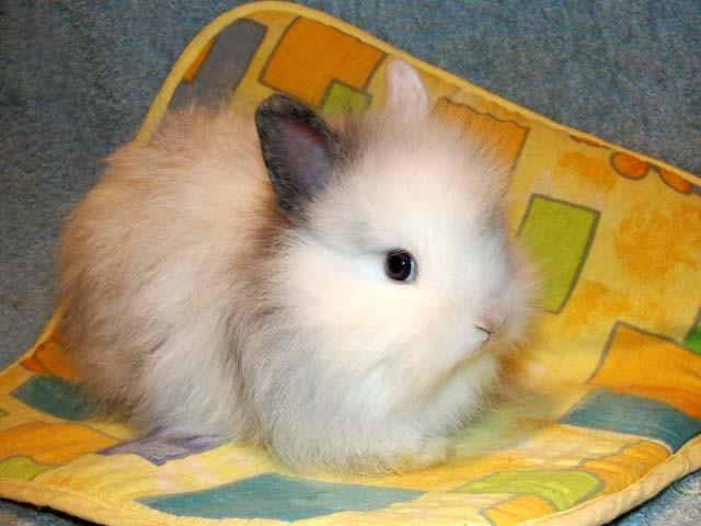 Беленький пушистый кролик