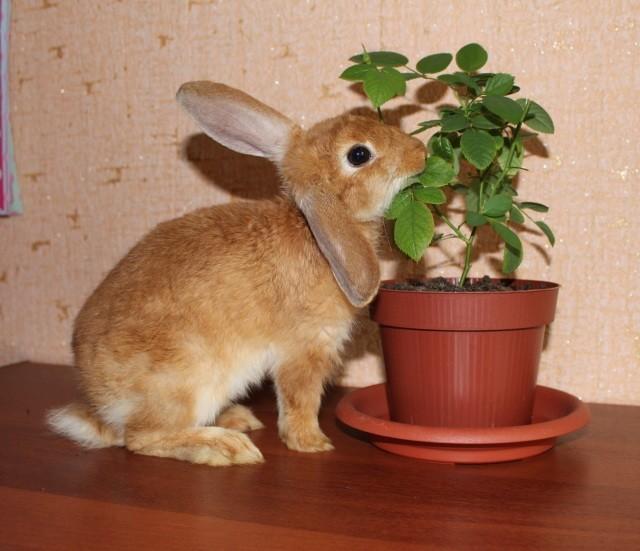 Кролик пробует листья растения