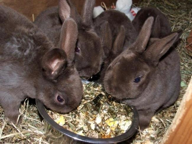 Крольчата питаются из кормушки