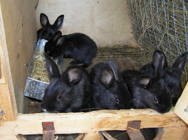 Малыши пробуют на зуб часть крольчатника