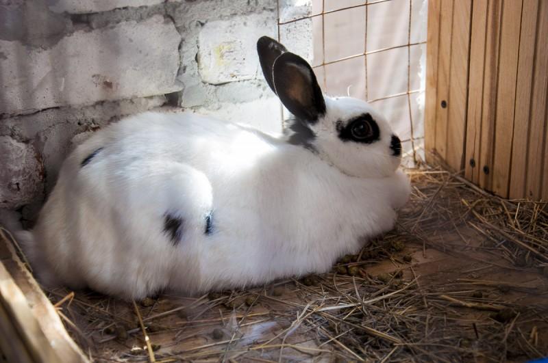 Красивая крольчиха в клетке