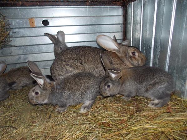 Кроличья семья в домике