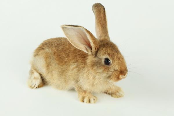 Что делать если у кролика понос: симптомы и лечение