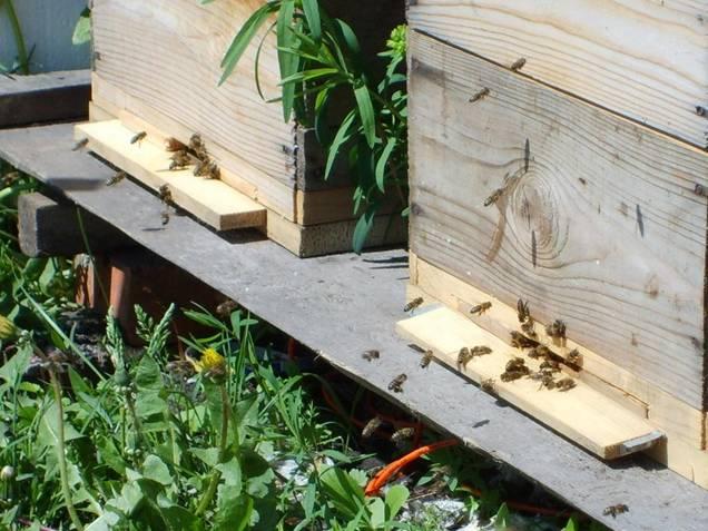 Пчелки трудятся в удобных домиках