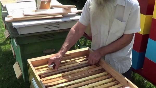 Работа с рамками в улье-лежаке