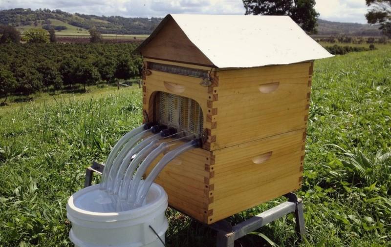 Улей собирающий мед в бочонки