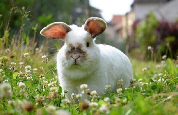 Можно ли кроликам давать полынь: советы и видео