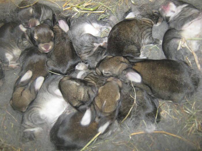 Крепкие зимние крольчата