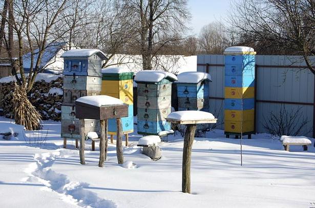 Ульи на улице зимой