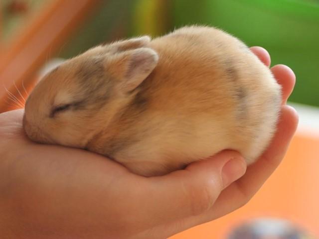 Маленький кролик на ладошке