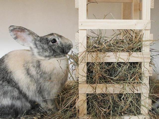 Кролик кушает траву из сенника