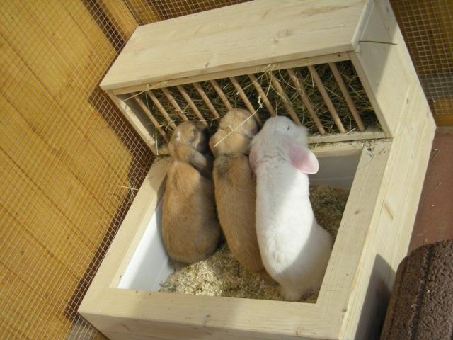 Все для декоративных кроликов своими руками