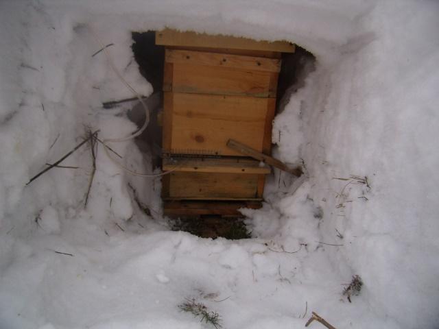 Улей под снежным сугробом