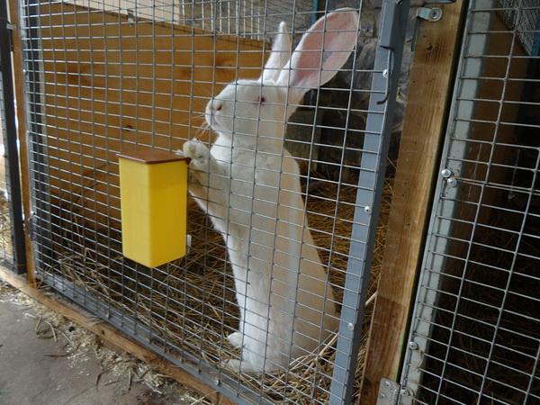 Белый кролик в удобной клетке