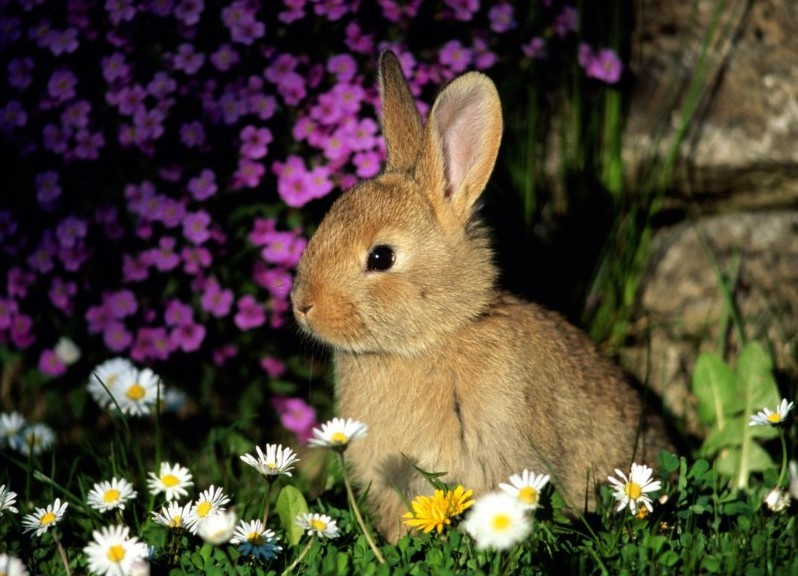 Декоративный кролик в цветах