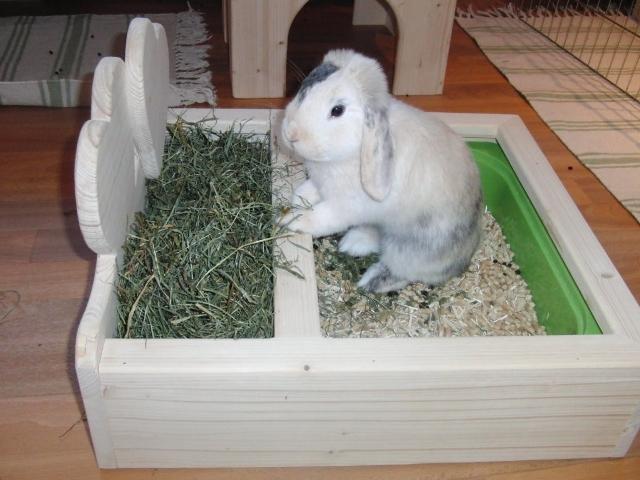 Кролик приучается к горшку