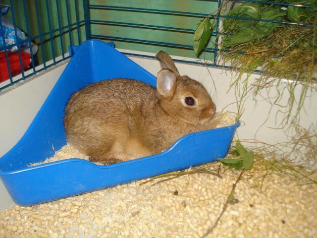 Кролик сидит в лотке