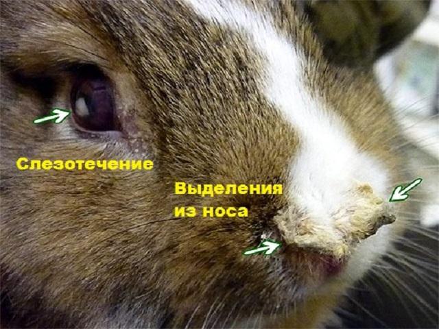 Поврежденные болезнью глаза и нос