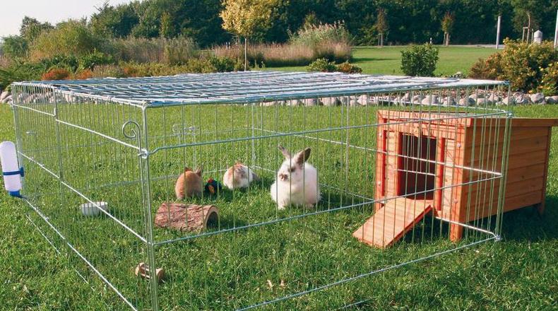 Кролики на выгуле на травке