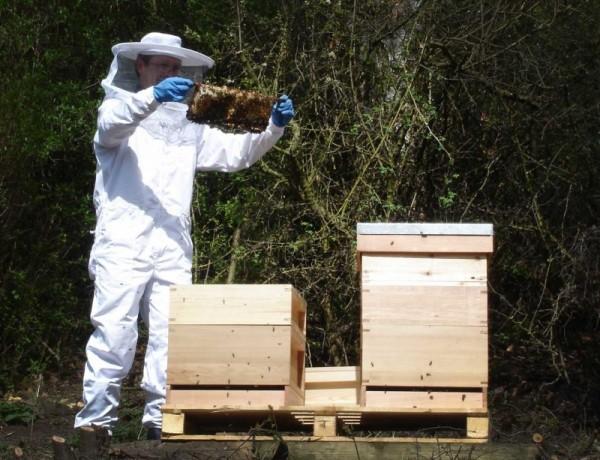 Весенний осмотр пчелиных семей