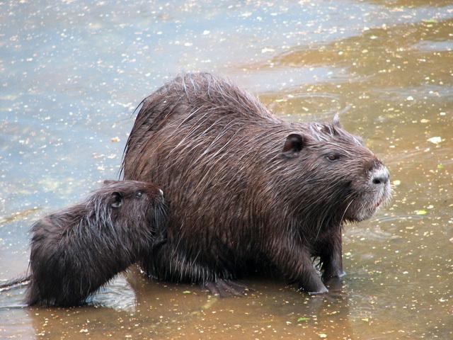 Малыш с мамой в водоеме