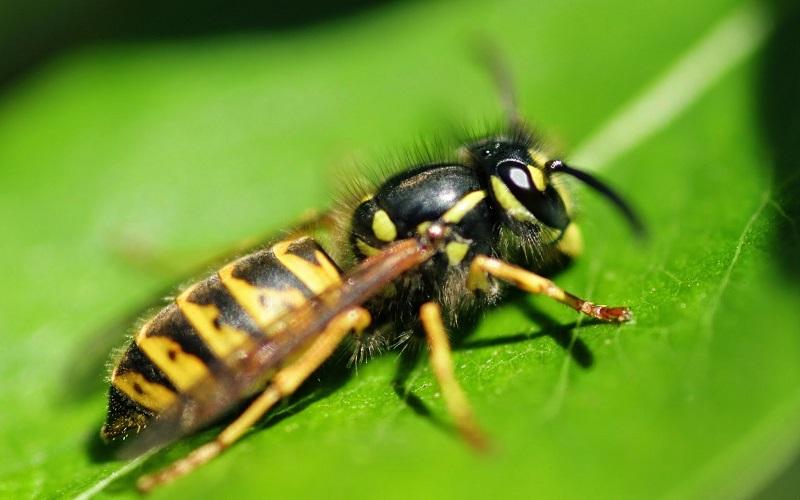 Взрослое насекомое на листочке растения