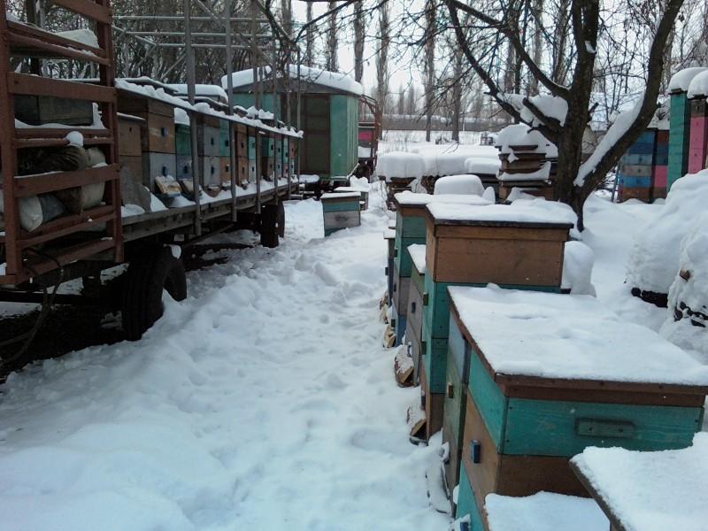 Зимовка в передвижном пчелопавильоне