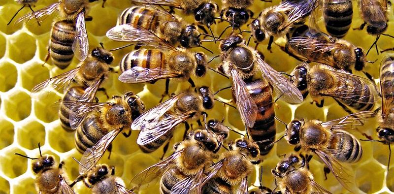 Пчелиная семья с Королевой в улье