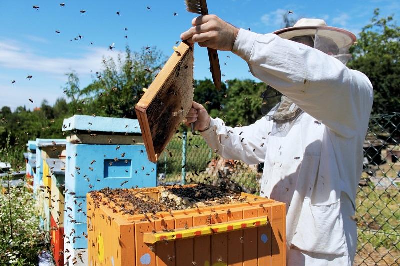 Пчеловод достает рамки