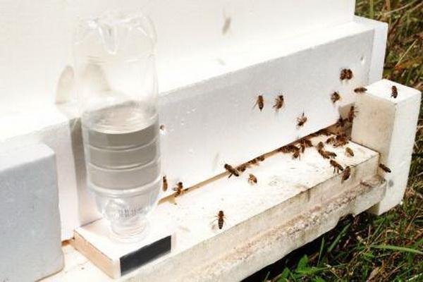 Вода для пчел в бутылке