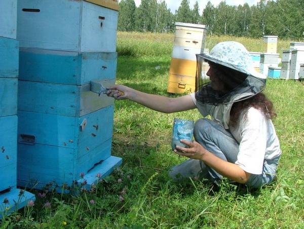 Покраска ульев акриловой краской: как и чем правильно покрасить пчелиные улеи, советы с видео