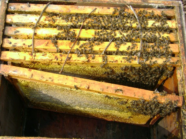 Рамки с пчелами зимой