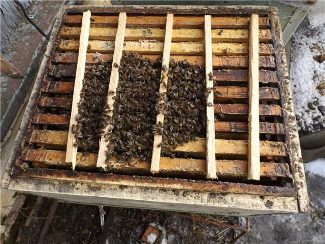 Пчелиный клуб на рамках