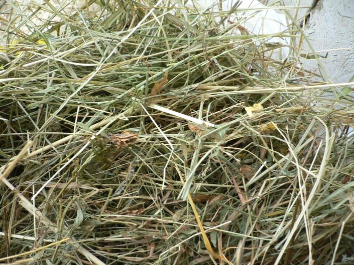 Какое сено лучше для кроликов