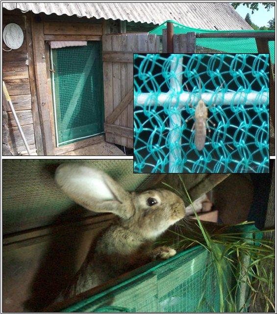 Кролик в клетке, оббитой сеткой от комаров